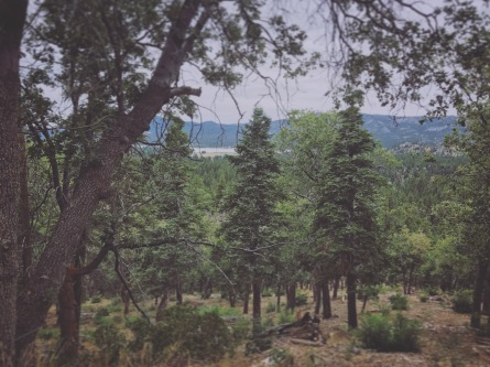 View of 3 Trees and Big Bear Lake from Fall Line Trail